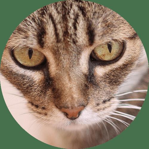 Katze Vera