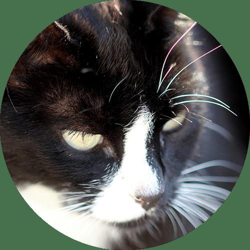 Katze Mimuna