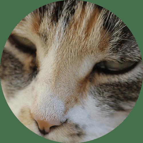 Katze Naosinha