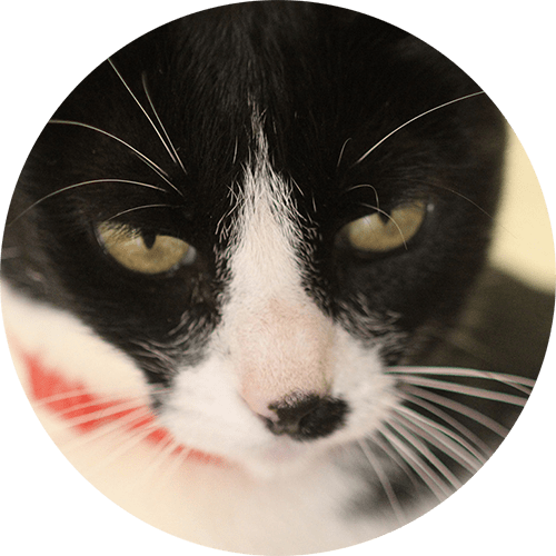 Katze Olga