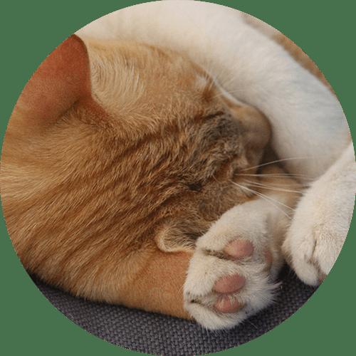 Katze Caramel