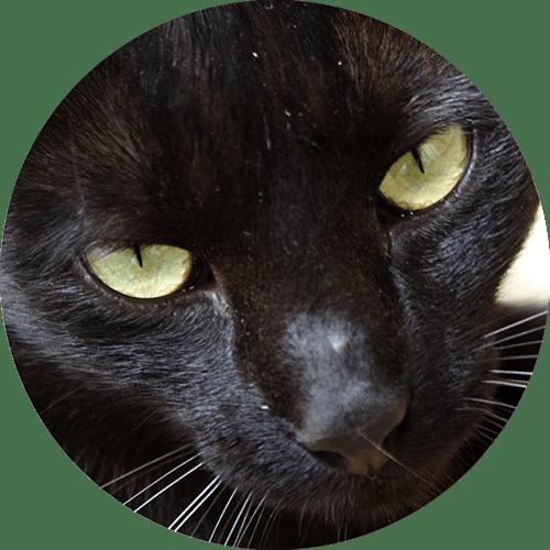 Katze Bica